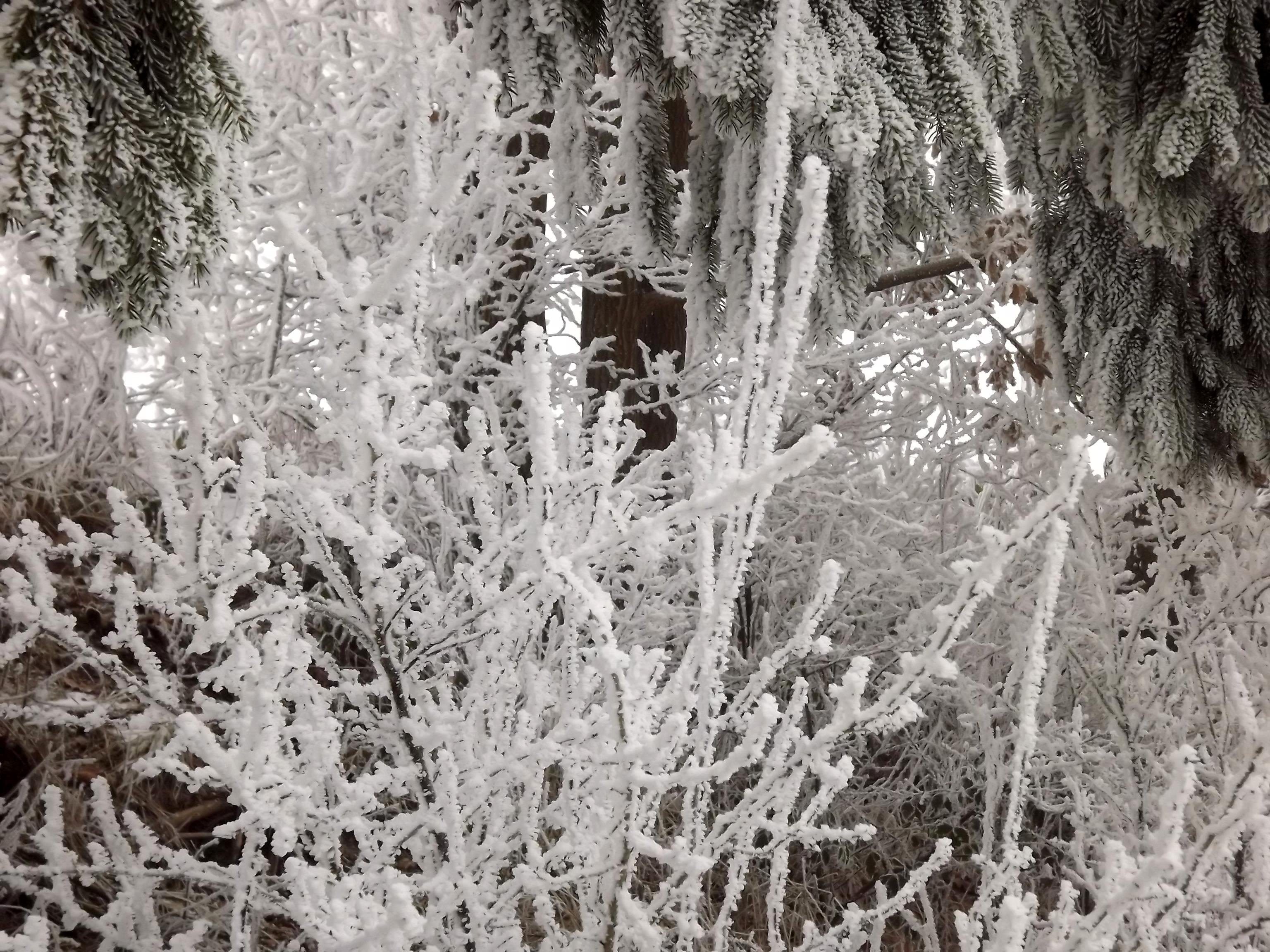 5814-strauch-winter-vereist