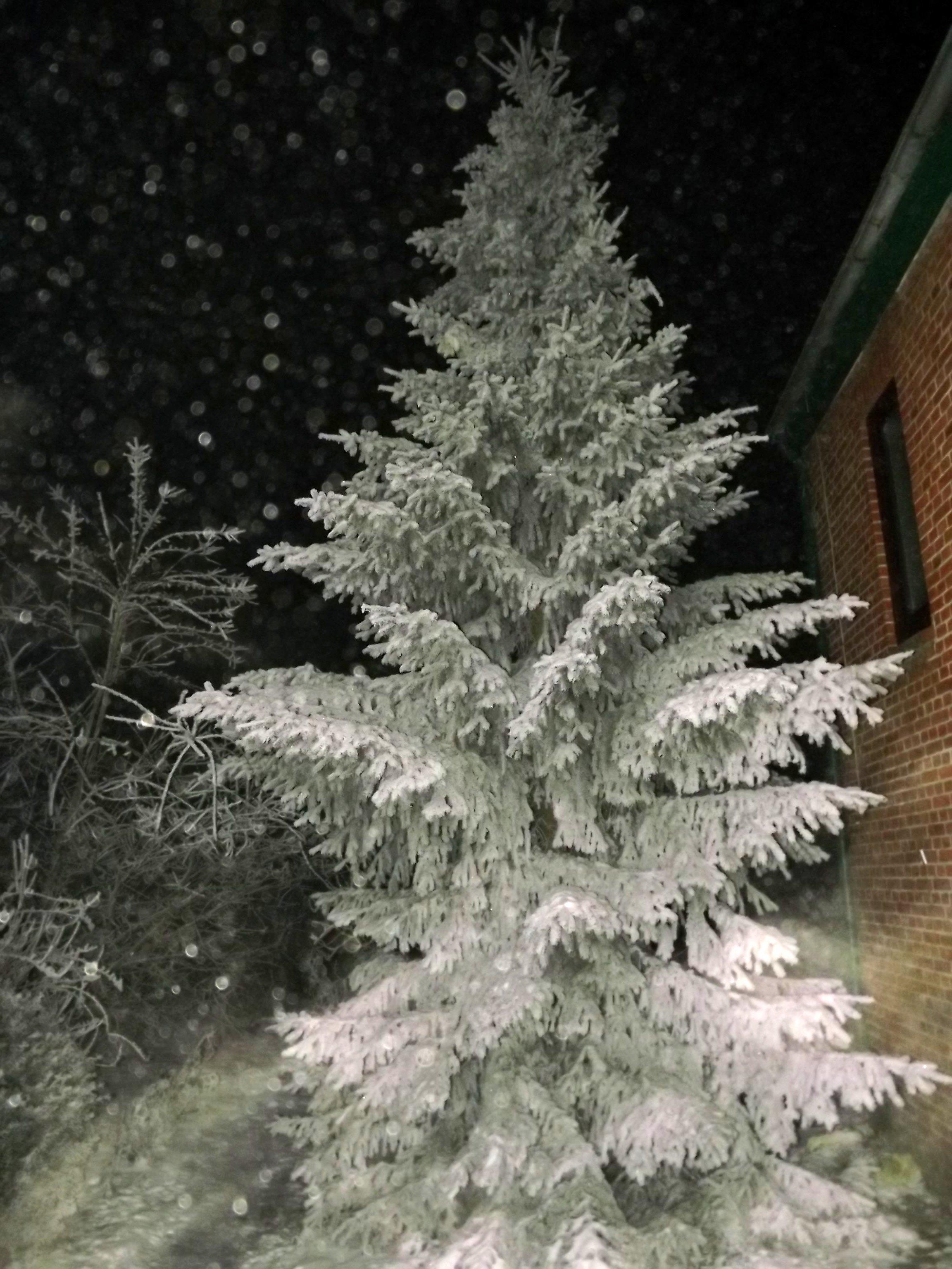 5837-tanne-schnee-verschneit-nachts-beleuchtet