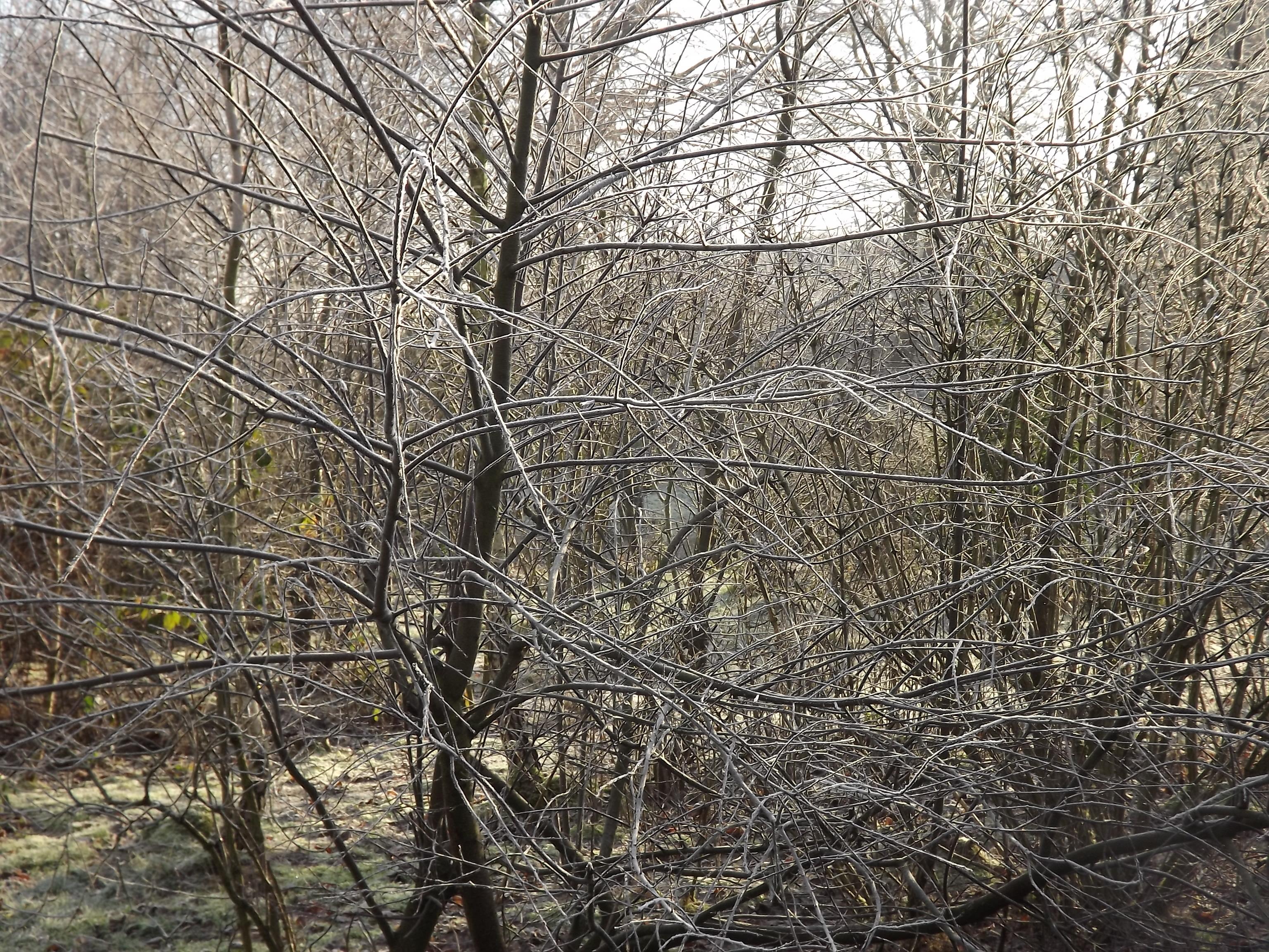 8360-zweige-im-winter