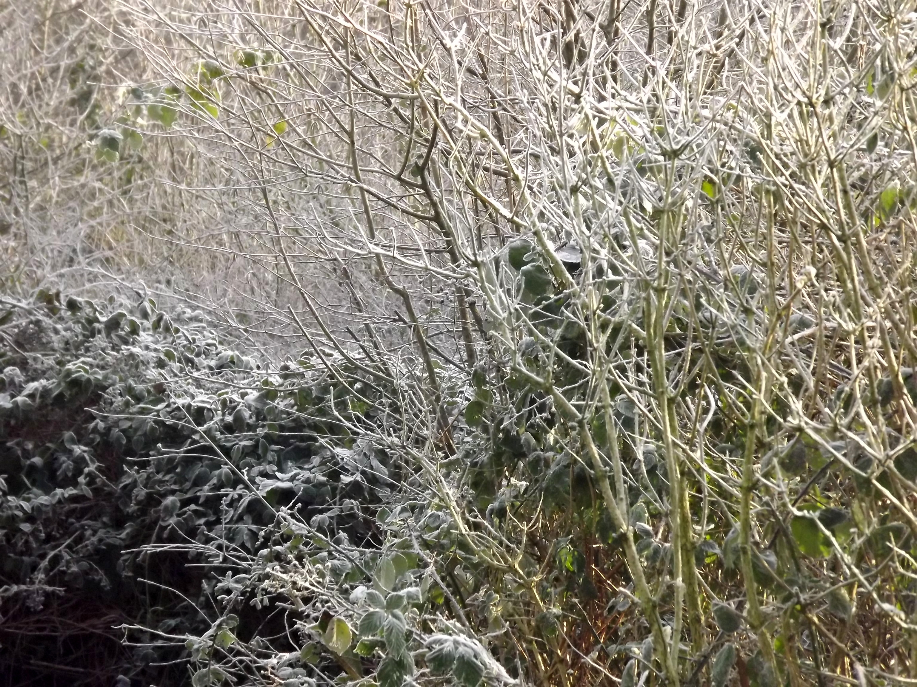 8361-gebuesch-im-winter