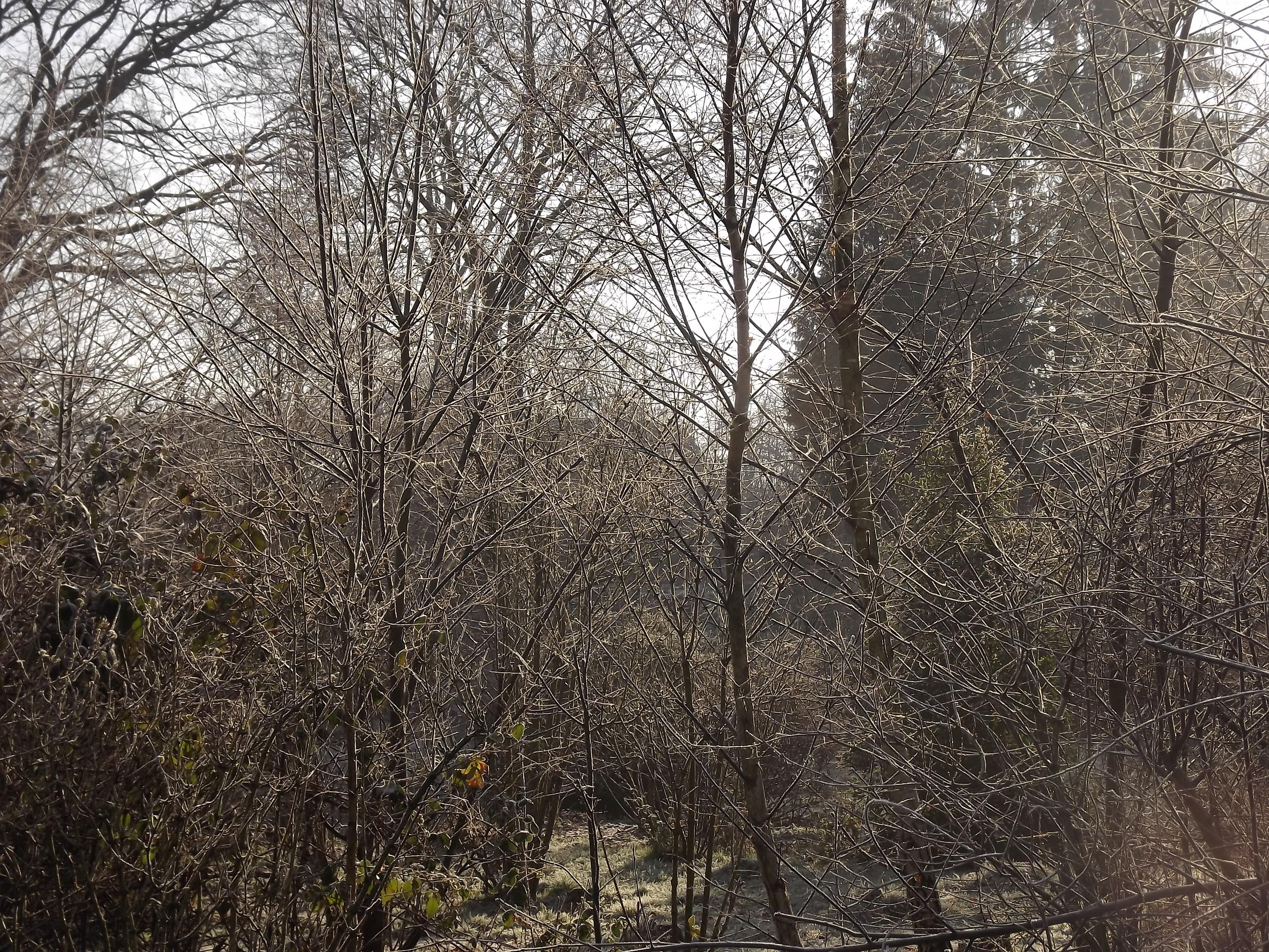 8363-wald-winter