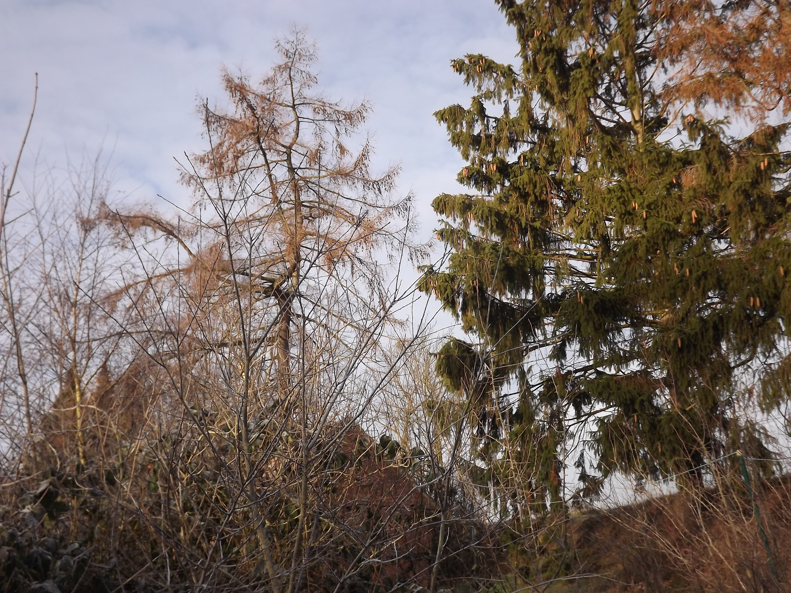 8374-abendsonne-winter-baeume