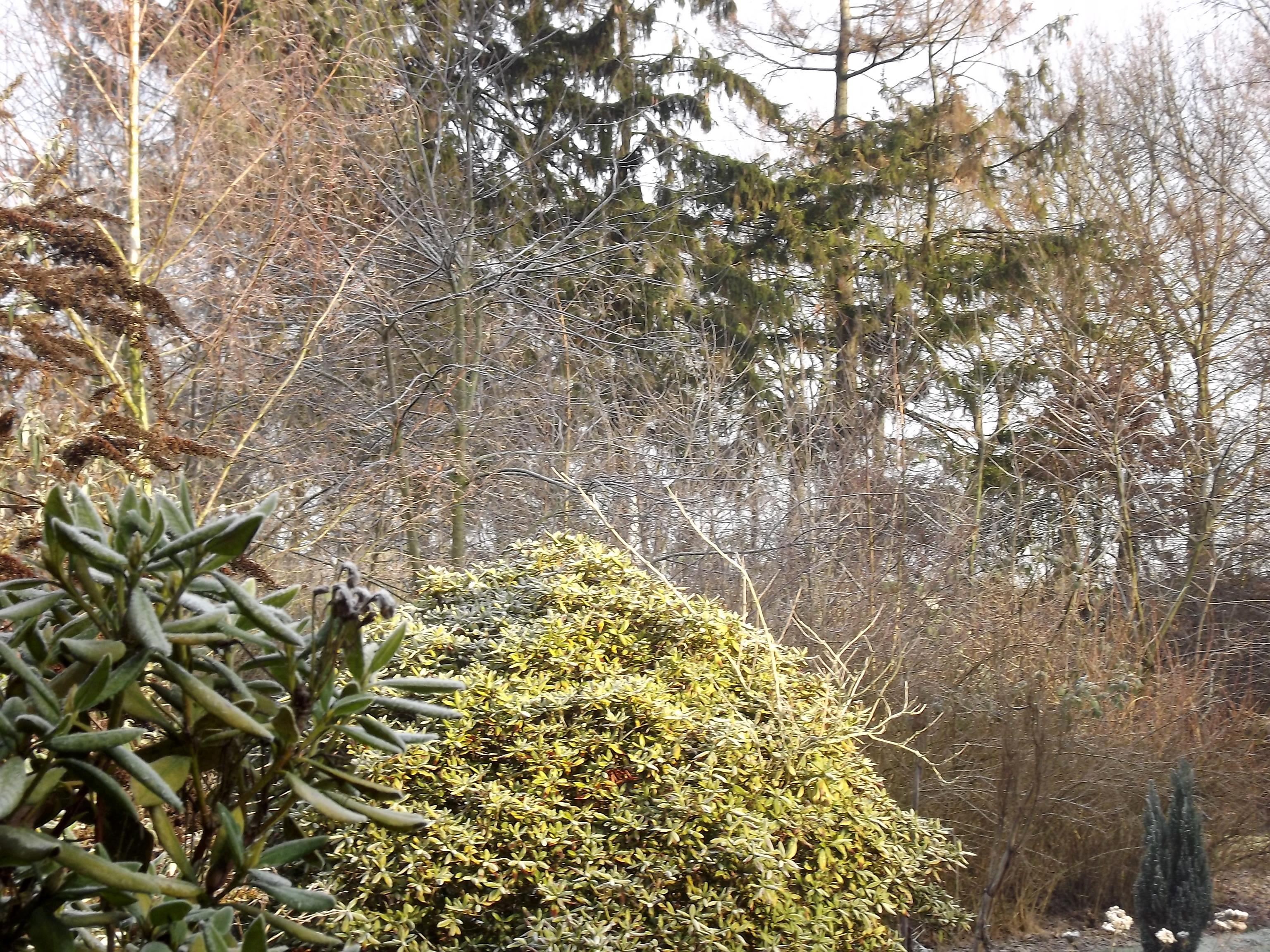 8387-wintersonne-wald