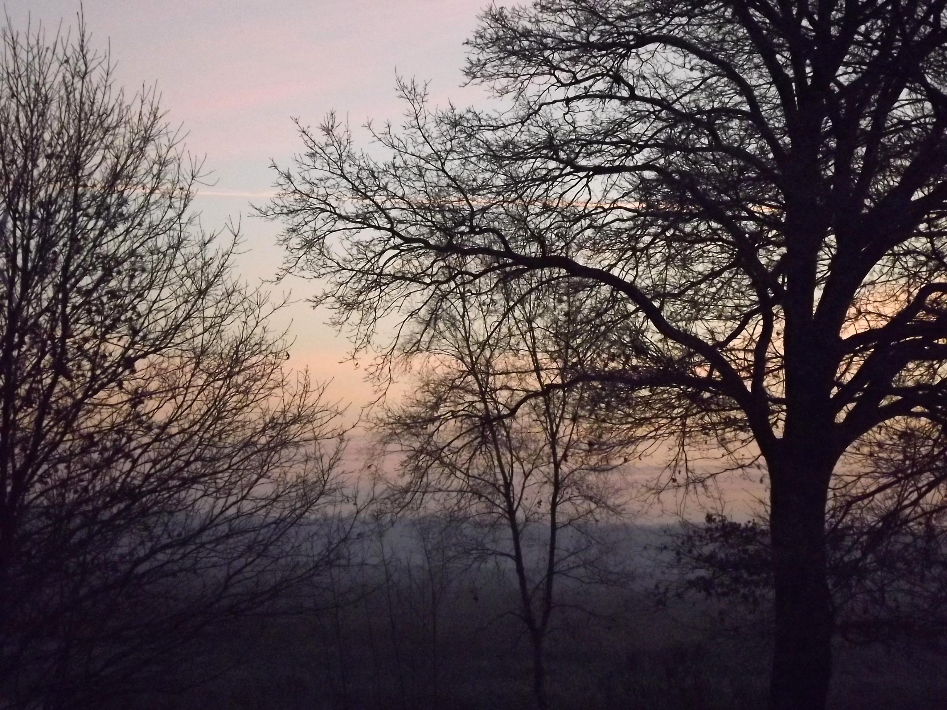 8407-baeume-morgenhimmel-morgenroete-sonnenaufgang