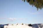 5772-schnee-hang-tanne-hintergrund-rahmen