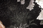 5847-tanne-schnee-verschneit-nachts-beleuchtet