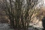 8357-genuesch-im-winter