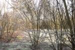 8358-zweige-im-winter