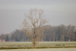 8364-baum-winter-sonne-beleuchtet