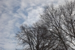 8382-kahle-baeume-winter-wolken-hintergrund