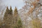 8384-wintersonne-wald