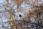 8410-vogel-in-zweigen