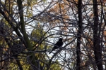 8416-vogel-gebuesch