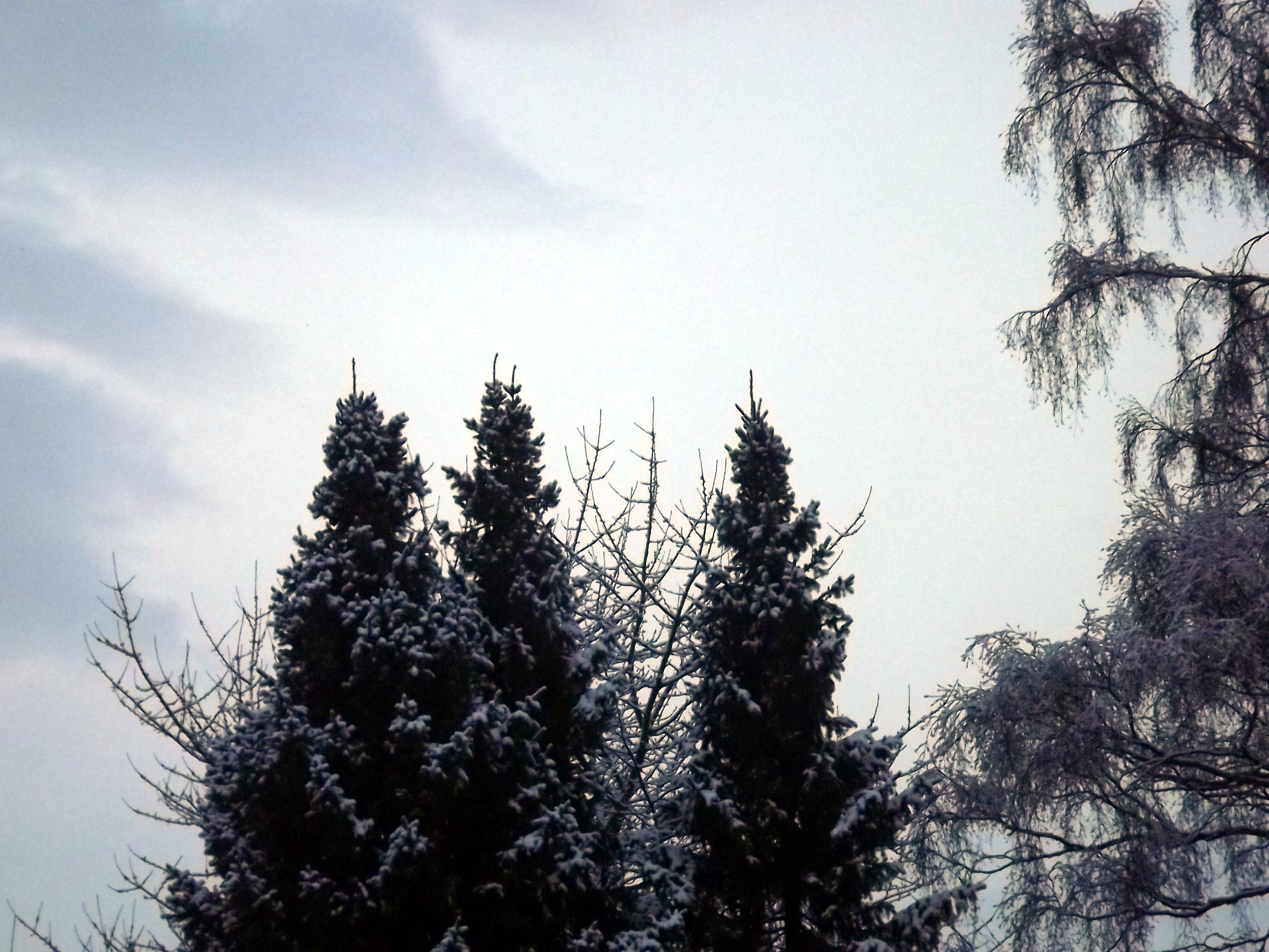 6875-tannen-verschneit-himmel