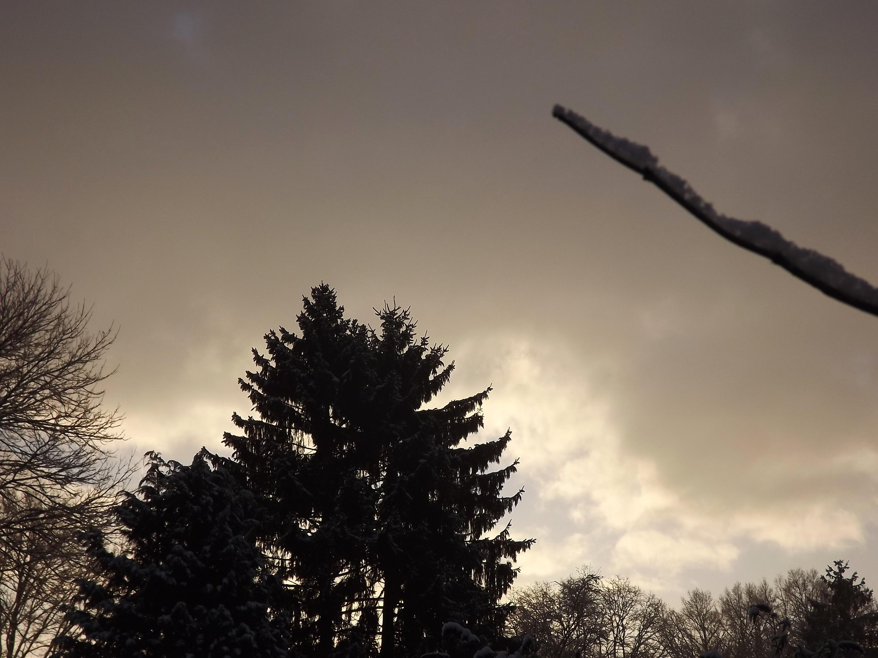 6887-baeume-verschneit-morgenlicht