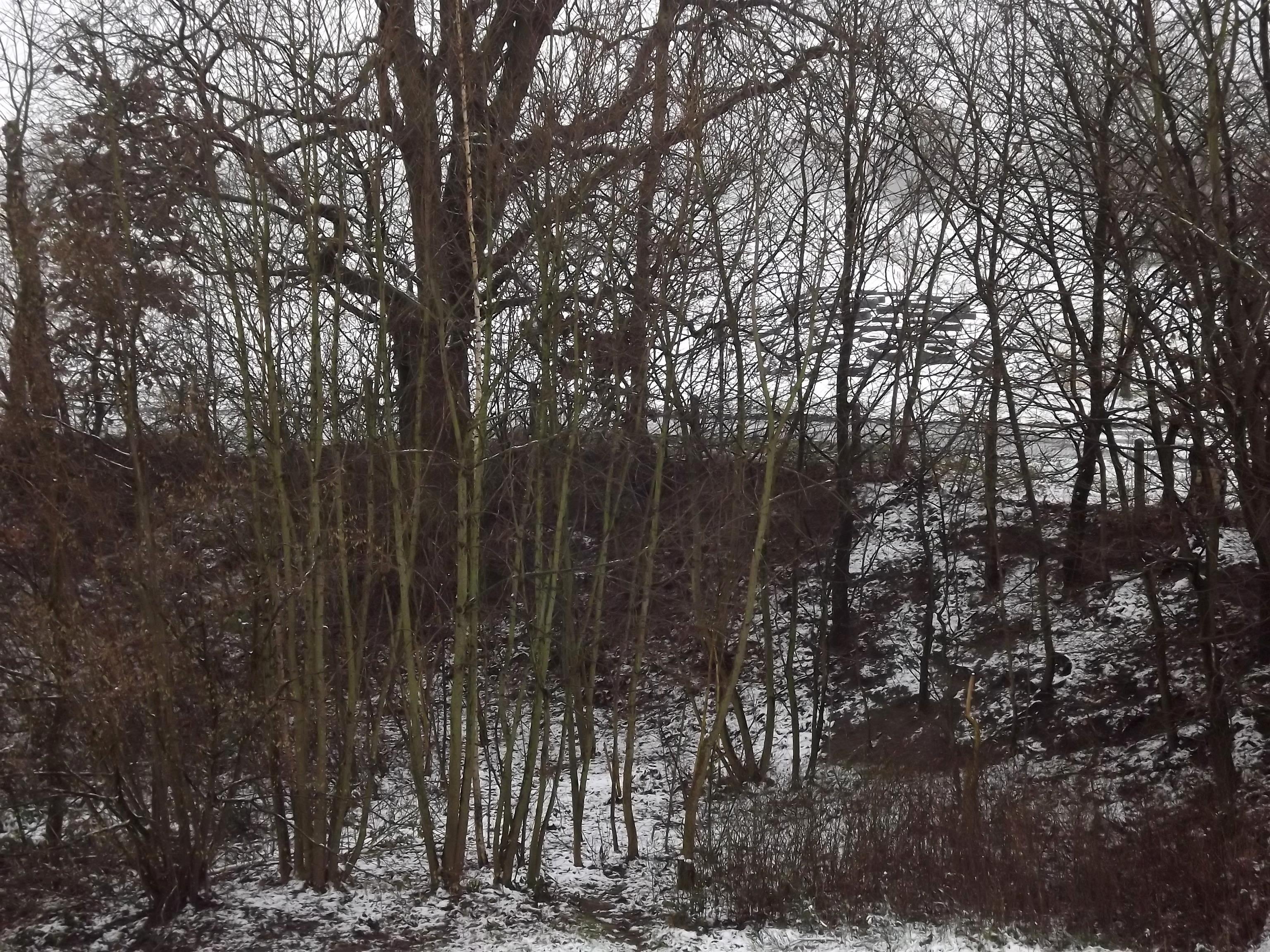 6901-verschneiter-wald