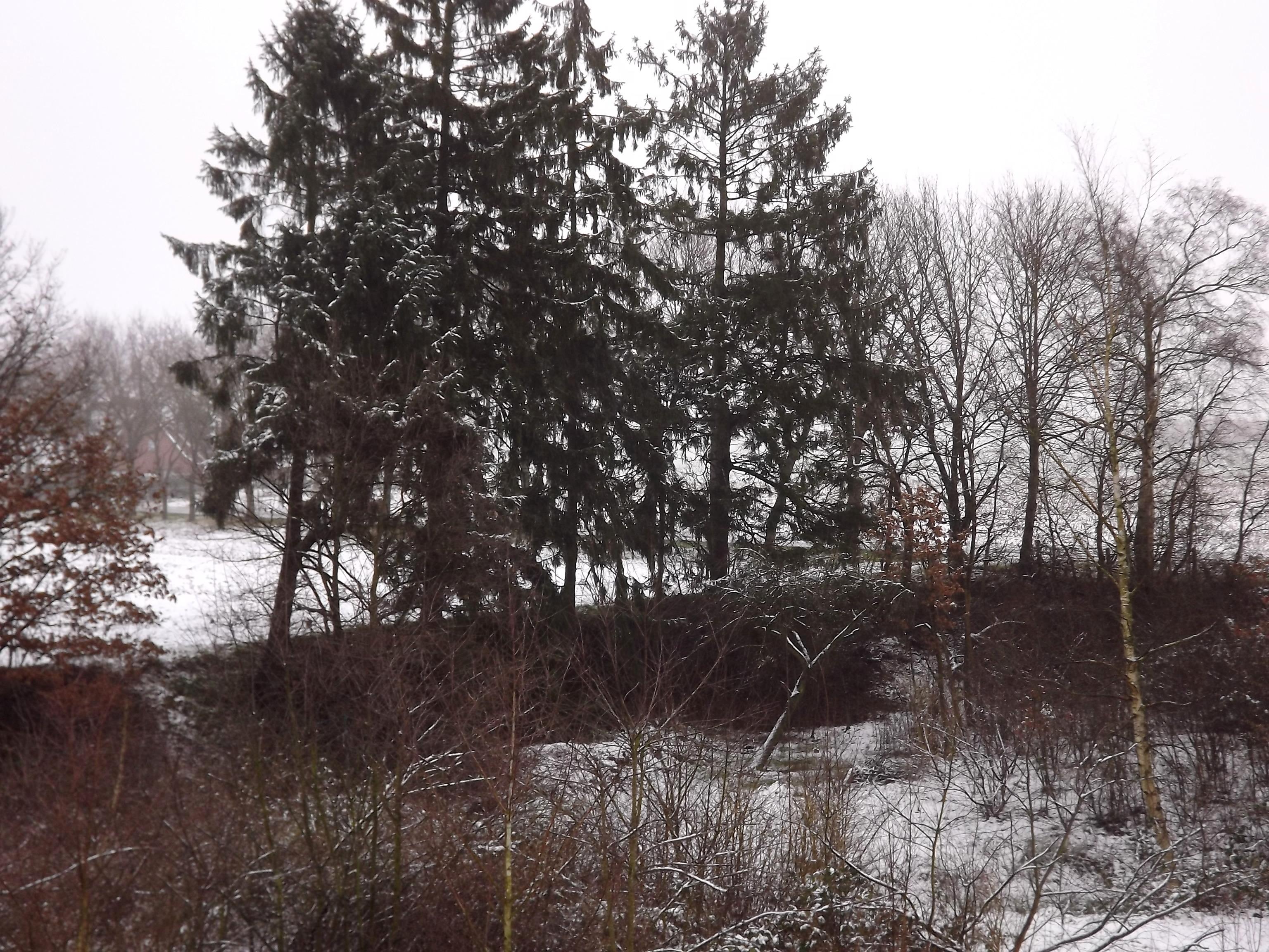 6907-winter-schnee-baeume