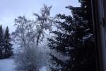 6871-baeume-verschneit