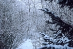 6872-verschneites-gebuesch