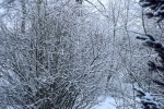 6878-zweige-schnee