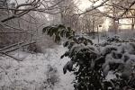 6881-verschneite-landschaft-morgenlicht