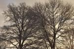 6884-verschneite-baeume-morgenlicht