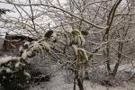 6894-verschneite-landschaft