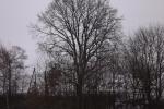 6902-winter-kahle-baeume