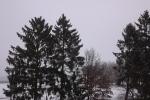 6906-winter-schnee-baeume