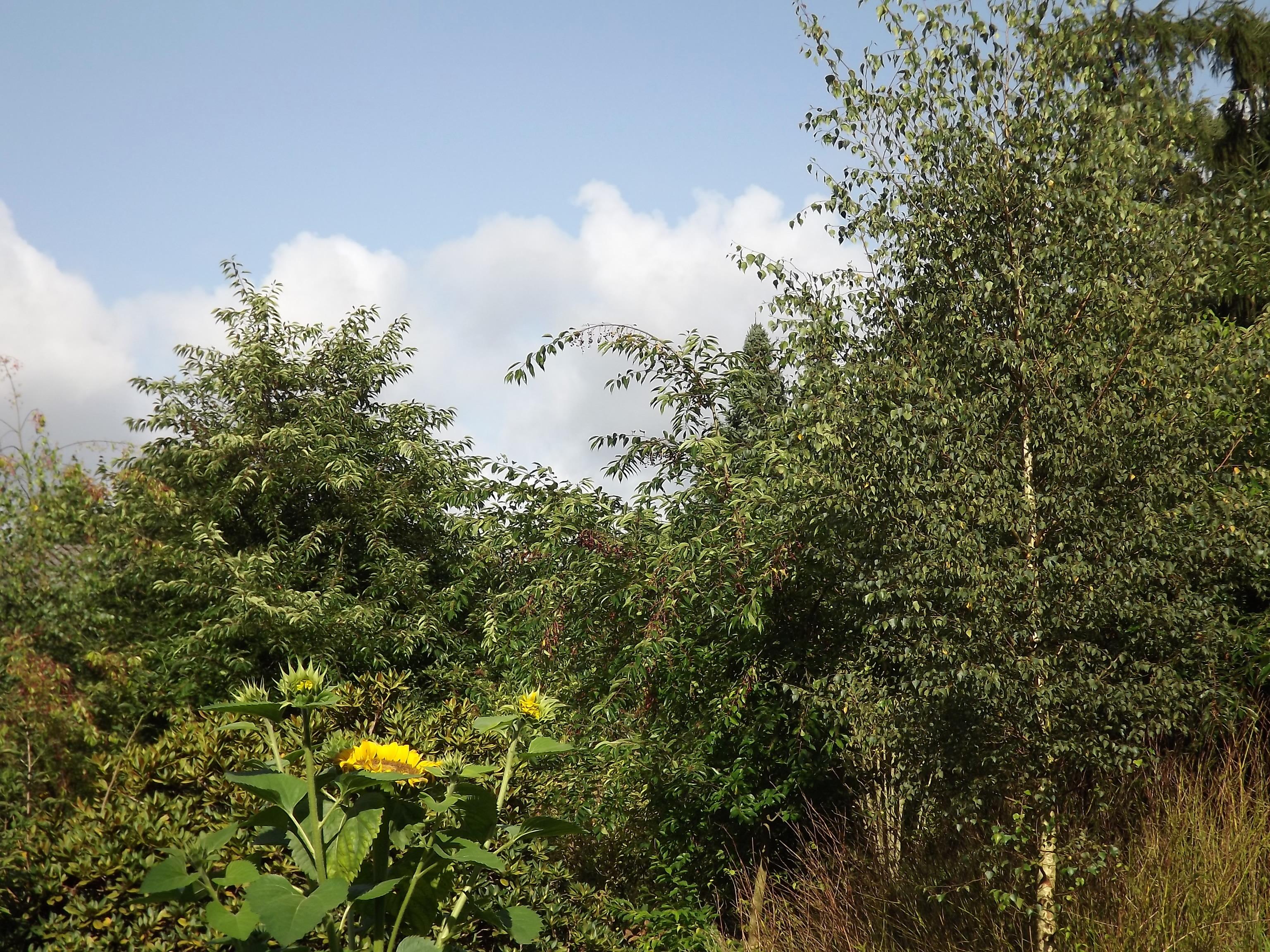 6439-pflanzen-im-sonnenlicht