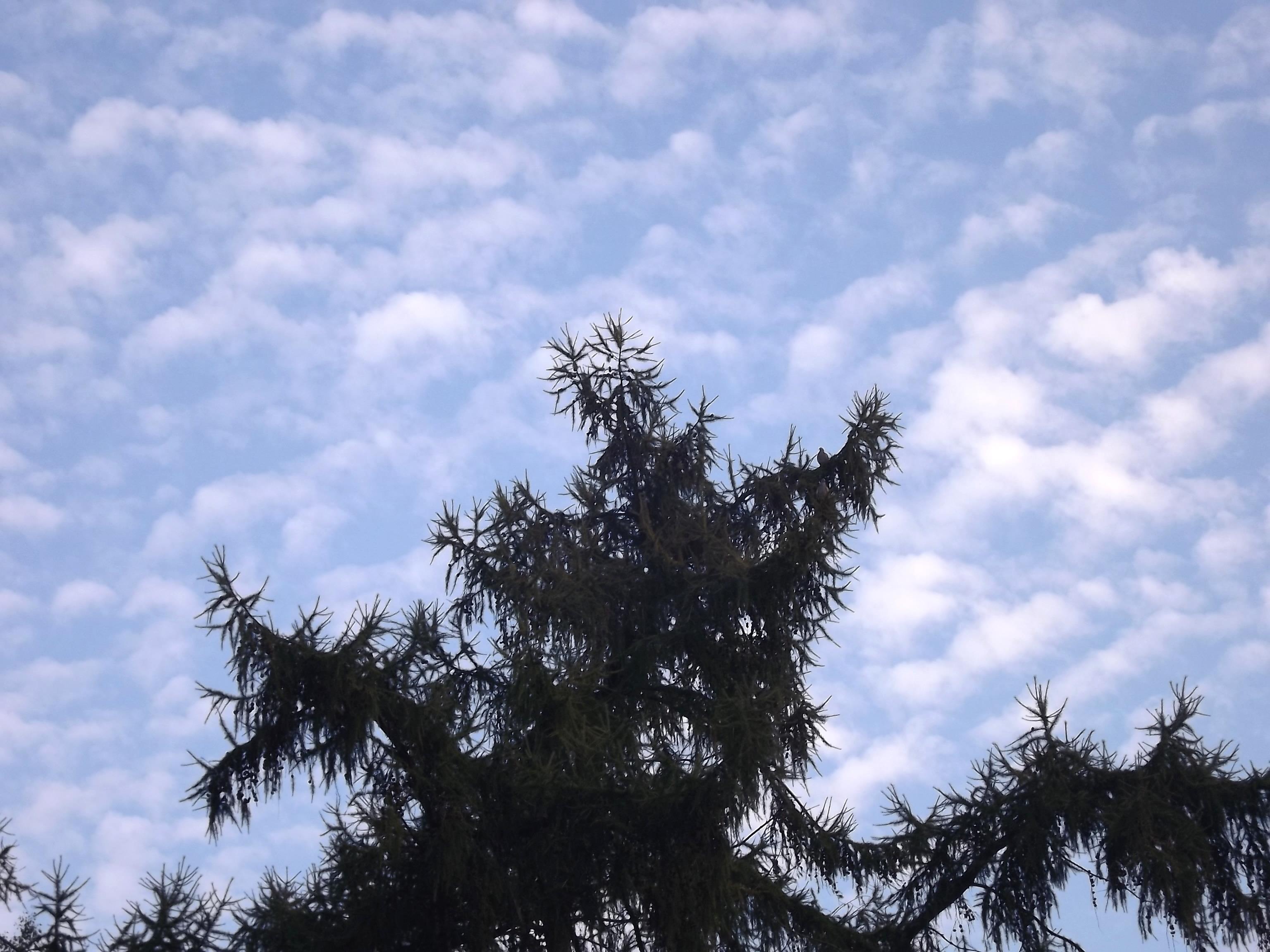 6468-lerche-wolken-himmel