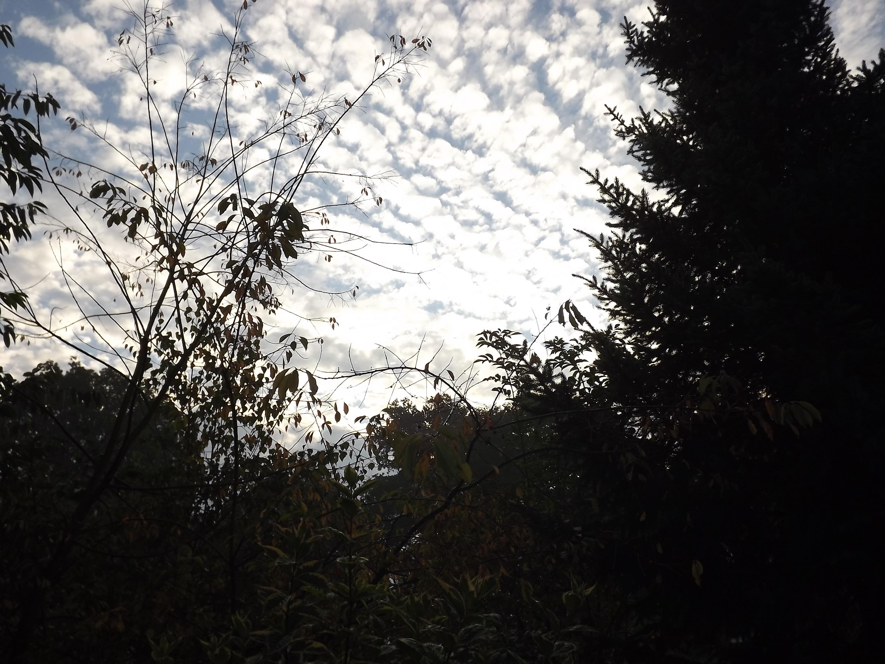 6484-baeume-gegenlicht-wolken-himmel