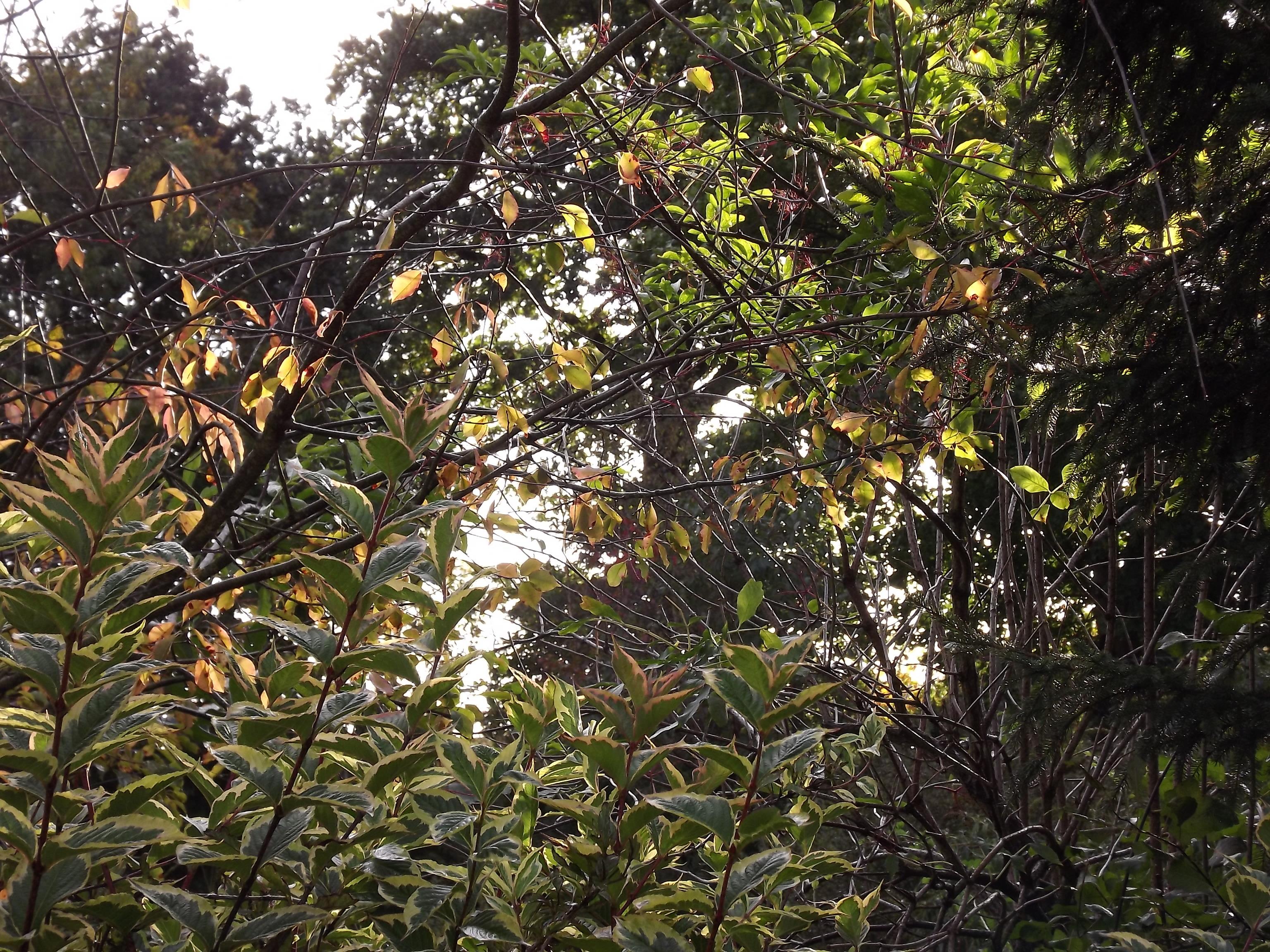 6525-licht-herbst-gruen-gelb-rot-pflanzen