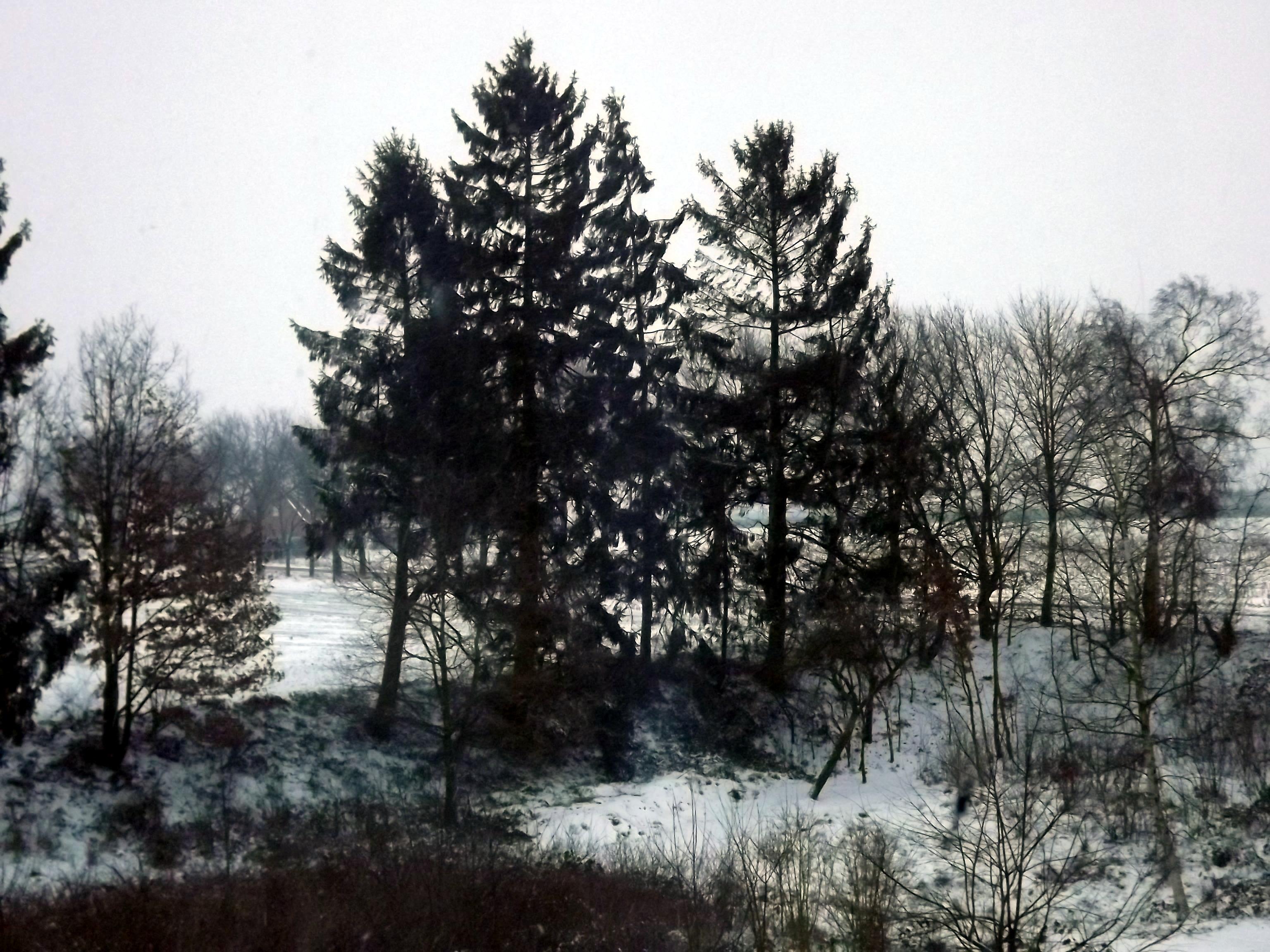 leicht-verschneit-4607