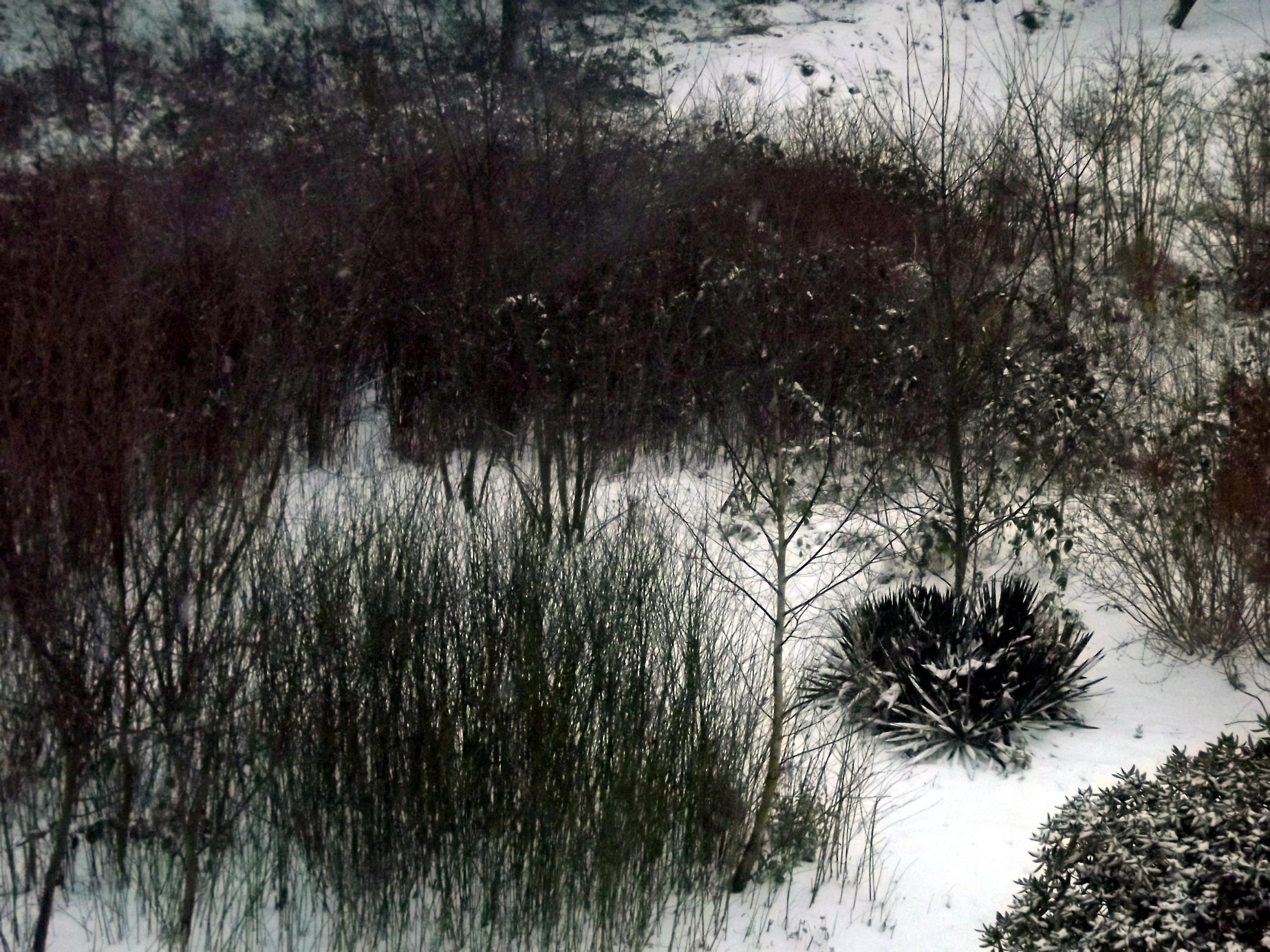 schneelandschaft-aus-der-luft-4610