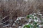 frisches-gruen-im-schnee
