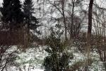 lichtung-im-schnee