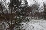 traubenkirsche-im-schnee