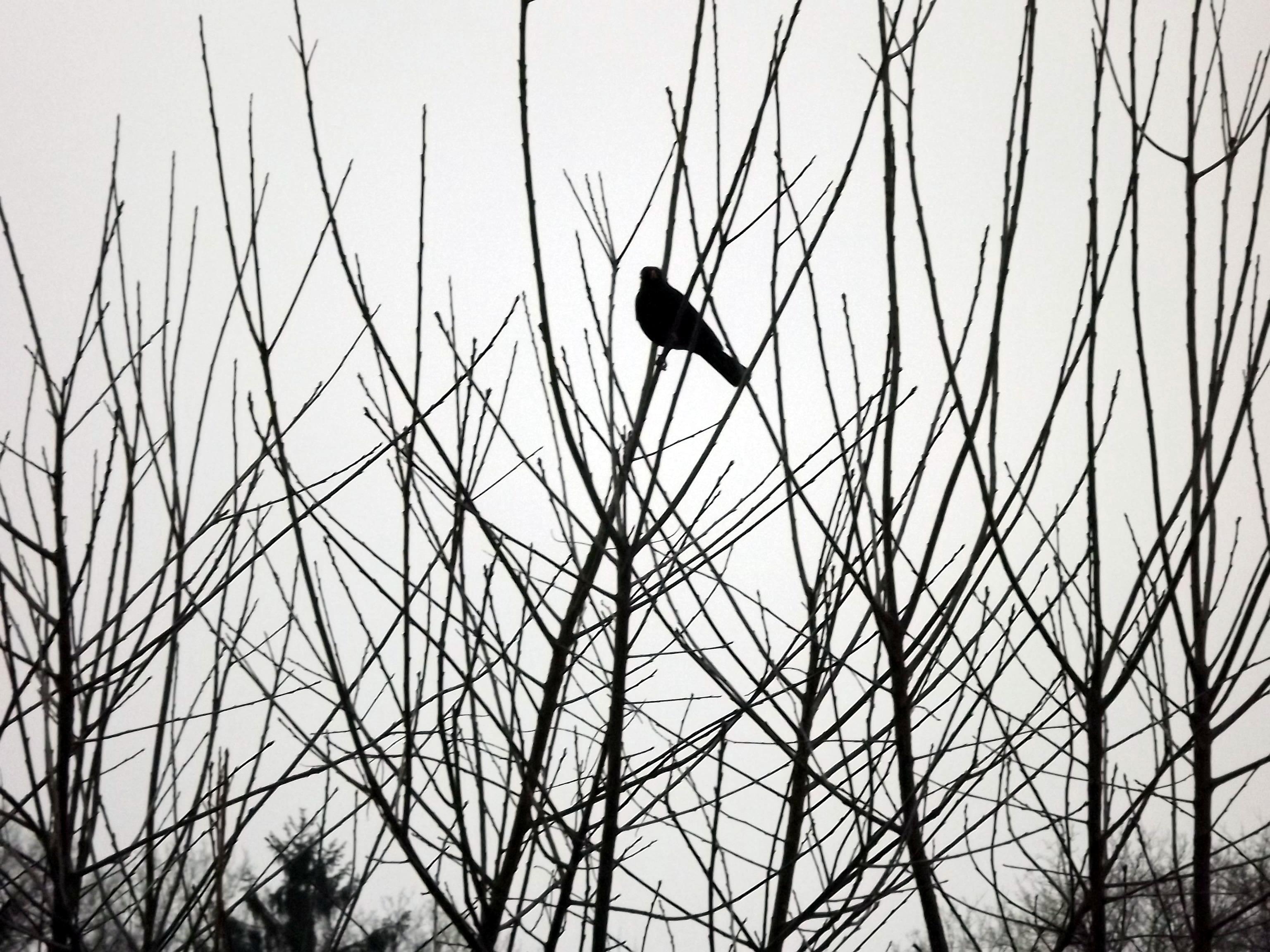 vogel-im-gestrueb