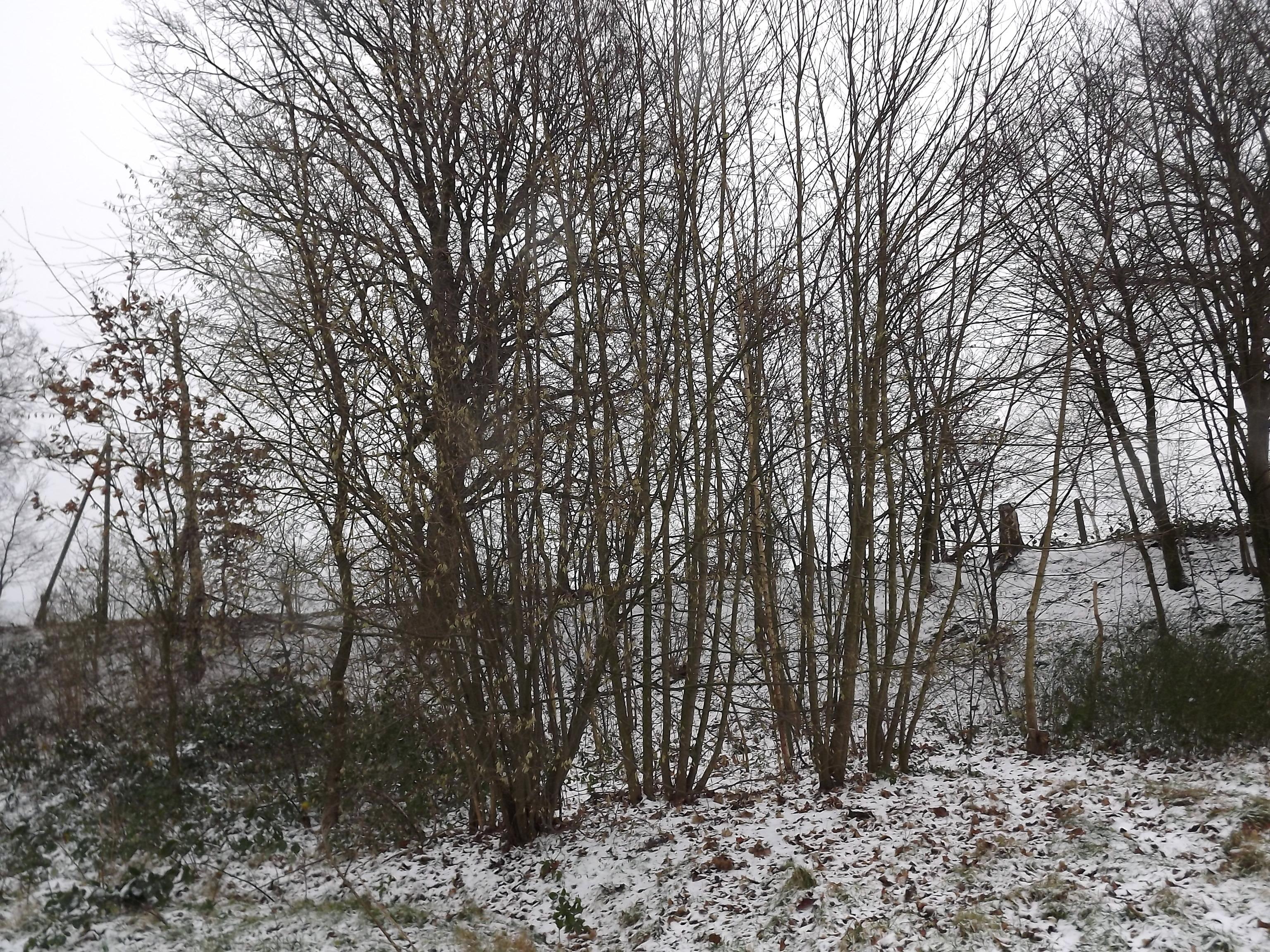 waeldchen-im-schnee