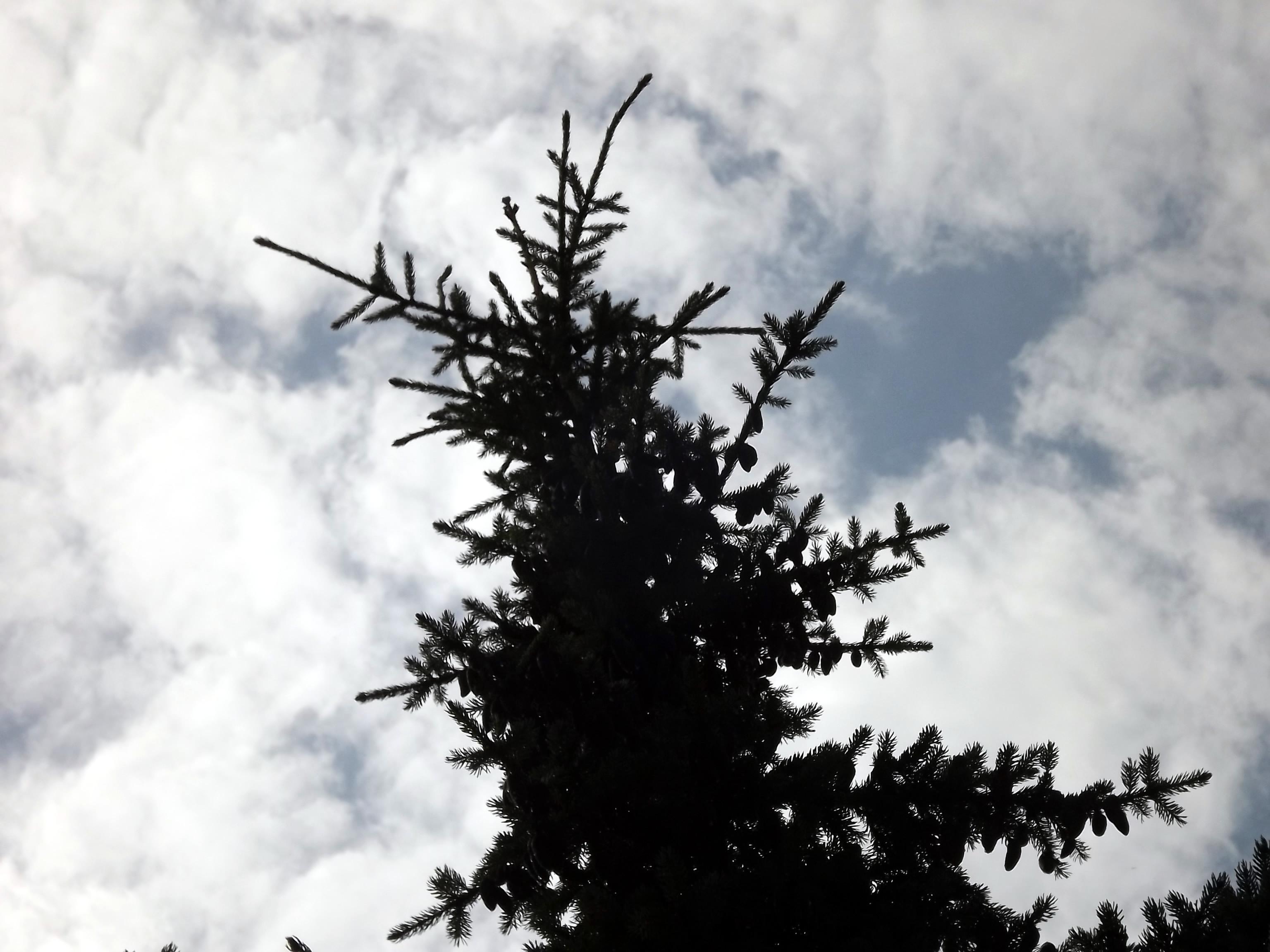 wolken-hinter-nadelbaum