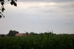 5225-gruenes-getreide
