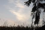 5296-getreide-himmel-wolken