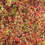 Verzauberter Herbst 2017