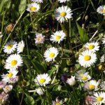 Zauberhafte Blüten Frühjahr 2016